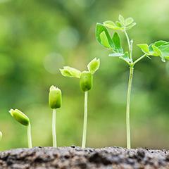 Stærke planter starter her